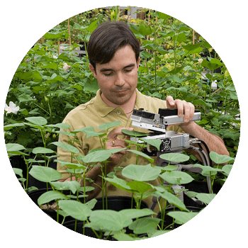 researcher analyzing leaves in the field